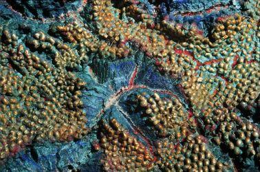 Uplift (2000) Detail